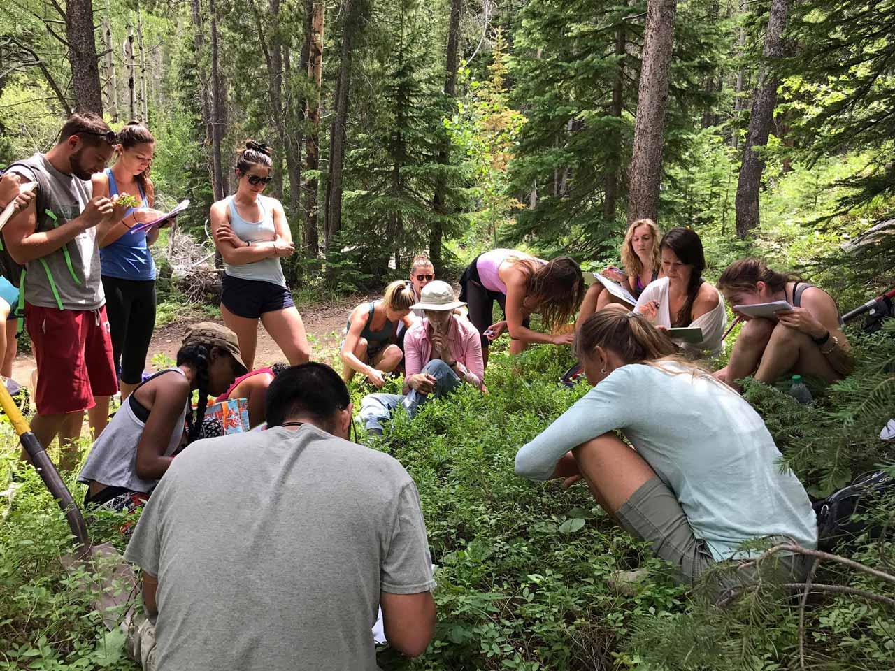 Herbalist Education, Sedona AZ - Canyon Spirit Ventures