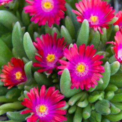 desert-flora-courses-2