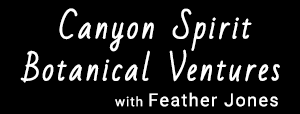 Canyon Spirit Ventures